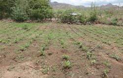 Cooperación Española e IICA ejecutarán proyecto en el Corredor Seco Centroamericano para fortalecer adaptación a la escasez hídrica y la sequía